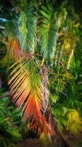 Palm Glow 2 © Jamie B. Banta