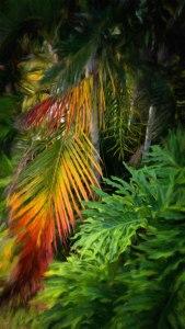 Palm Glow © Jamie B. Banta